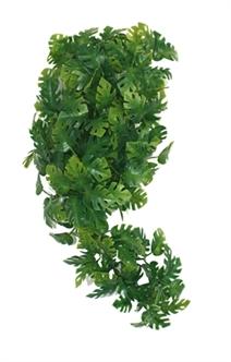KOMODO PLANT SPLIT PHILODENDRON 30 CM